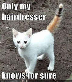 Only my hairdresser knows for sure.
