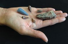 Teeth from phytosaurs, a reptile from the Triassic Period about 210 million years ago in what is now the western United States. The blue tooth on the left is a 3-D printed replica of a tooth embedded in the thigh bone of a rauisuchid, another Triassic period carnivore. The details of the tooth were digitally extracted using CT scans.