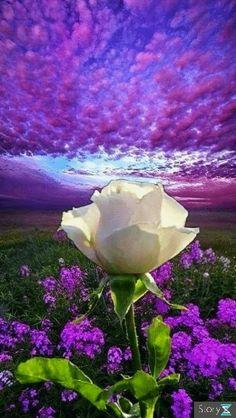 Flower with a Beautiful View Beautiful Scenery Pictures, Beautiful Flowers Wallpapers, Beautiful Rose Flowers, Beautiful Nature Wallpaper, Beautiful Gif, Exotic Flowers, Amazing Flowers, Beautiful Landscapes, Beautiful Gardens