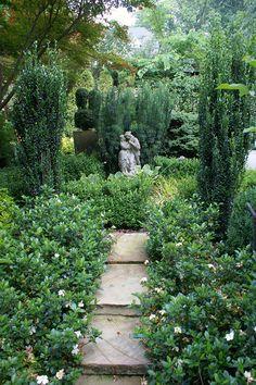 Formal garden with Gardenia, Ilex 'Sky Pencil'  Cephalotaxus