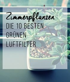 Houseplants – the 10 best green air filters – House Plants House Plants Decor, Plant Decor, Air Plants, Indoor Plants, Garden Plants, Diy Garden, Herb Garden, Garden Beds, Indoor Garden