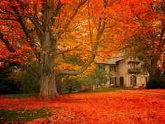 I look forward to the changing of the trees. Definitely having my family pictures done in the colored leaves this Fall! Just breathtaking ...