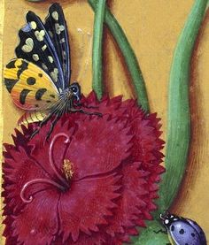 Grandes Heures Anne de Bretagne flower and insects detail Illuminated Letters, Illuminated Manuscript, Renaissance Paintings, Book Of Hours, Medieval Manuscript, Botanical Prints, Middle Ages, Botany, Insects