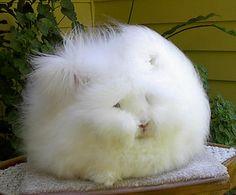 fluffy, fun, white, rabbit, cute