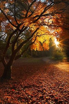 Photography Nature Autumn Beauty 15 Ideas For 2019 Sunday Photos, November Pictures, October Images, Autumn Pictures, Nature Pictures, Art Pictures, Beautiful Places, Beautiful Pictures, Simply Beautiful
