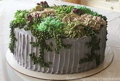 Succulent Cake--How to transport a cake in the car to a venue 10 hours away.
