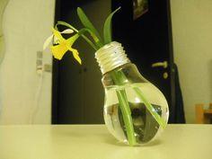 C'est le printemps! Mettez-vous au vert ! Une jonquille dans une ampoule... et la lumière (re)fut !