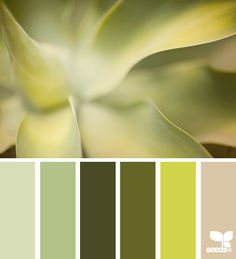 succulent tones (I love greys, taupe and the green color used in kitchens in the late 70's)