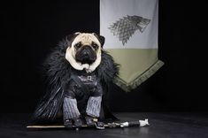 Game of Thrones Pugs of Westeros, Jon Snow - Roxy, Blue and Bono are three cute pugs from California that love being dressed up and photographed by their owners – Phillip & Sue Lauer.