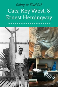 Cats, Key West, and Ernest Hemingway – Ann Cavitt Fisher | #anncavittfisher #travel #travelblogger