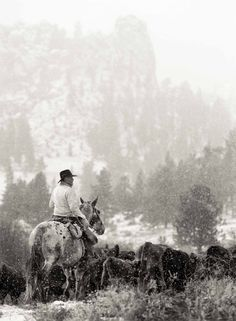 Allen Birnbach, Cattle Drive Tom and Killian Cowboy Horse, Cowboy Art, Cowboy And Cowgirl, Lucky Luke, Cowgirls, Western Photography, Equine Photography, Cattle Drive, Cowboy Pictures