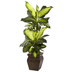 "Golden Dieffenbachia w/Decorative Planter.  One of our more profound offerings, this striking Golden #Dieffenbachia stands a full 45"" high (that's almost four feet tall!) An ideal accent plant for any home or office, it offers a unique, ""leafy"" look that only a  Golden Dieffenbachia can bring. Comes complete with a beautiful, ornate planter that perfectly balances the look. Makes an ideal housewarming or ""grand opening"" gift as well. #silkplant"
