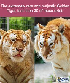 #endangered