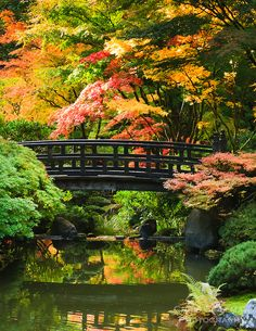 Moon Bridge in Strolling Pond Garden in the Portland Japanese ...