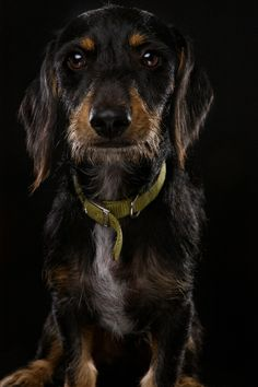 60 Fantastic Examples of Dog Photography - TutorArt | Graphic Design Inspiration, Busniess Cards, Photo, Case Studies