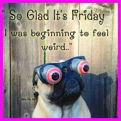 friday quotes Find very good Jokes, Memes and Quotes on our site. Keep calm and have fun. Funny Pictures, Videos, Jokes & new flash games every day. Friday Jokes, Friday Quotes Humor, Happy Friday Quotes, Funny Friday Memes, Funny Quotes, Funny Memes, Monday Memes, Funny Pugs, Funny Good Morning Memes