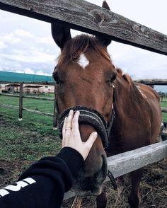Cute Horses, Pretty Horses, Horse Love, Beautiful Horses, Animals Beautiful, Horse Photos, Horse Pictures, Star Stable Online, Cavalo Wallpaper