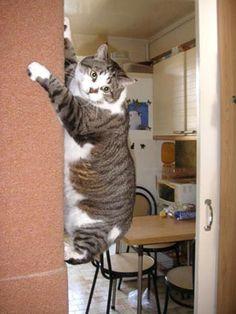 """Résultat de recherche d'images pour """"chat grimpe partout"""""""