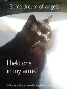 All too true Crazy Cat Lady, Crazy Cats, Animals And Pets, Cute Animals, Pet Loss Grief, Pet Remembrance, Cat Quotes, Rainbow Bridge, Pet Memorials
