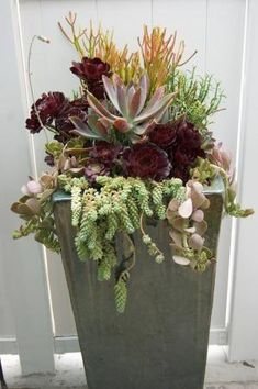 Succulent arrangement from Simply Succulents by jami