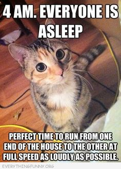 funn cat picture 4am everyone asleep let me run from one end of the house to the other