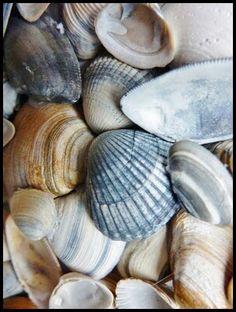 plaj terlik kumsal deniz kumu beach tatil holiday summer holiday yazın yapılacaklar listesi yazın yapılacak şeyler yazın ne yapmalı yazlık aktiviteler blog blogger life style blog deniz kabukları deniz kabuğu Yazın Yapılacak Şeyler / Ben Bu Yaz Bronzlaşmak…