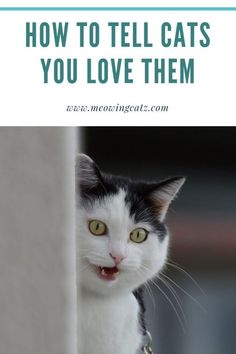 How can you tell your cat you love them