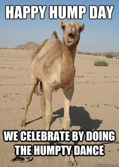 Happy Hump Day We celebrate by doing the Humpty Dance - God Camel - quickmeme Wednesday Morning Quotes, Wednesday Memes, Wednesday Hump Day, Wednesday Motivation, Weekend Quotes, Good Morning Quotes, Wednesday Sayings, Wednesday Greetings, Wednesday Coffee