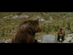 L'Ours (The Bear), Jean-Jacques Annaud - the cougar scene Seven Years In Tibet, Nature Film, Bear Cubs, Bears, Paws And Claws, Mountain Lion, We Movie, Creature Feature, Animals