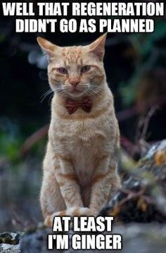 Doctor Who more like Doctor Mew. At least now he's got 9 screw-ups before he has to regenerate.