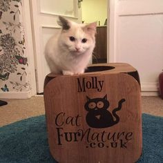 Awwwwww  Molly is so cute!  what a sweetie  thank you so much  we are so glad she likes it!   #cat #catsofinstagram #cats_of_instagram #catfurnature #catfurniture #catsinboxes #cattoy #INSTACAT_MEOWS #cutecat #PurrMachine #catsinboxes #catbox #Excellent_Cats #BestMeow #dailykittymail #thecatniptimes #catcube #catpod #ArchNemesis #FlyingArchNemesis #myindoorpaws #ififitsisits #cutecatcrew #catchalet #catnip #themeowdaily #kitty #catpyramid #miuandmaosfurriends