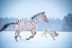 Dalmatian and Appaloosa Horse are Best Friends http://ift.tt/2geiFFt
