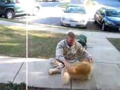 "Soldier returning to warm welcome from his dog - this makes you go ""AWWWW"""