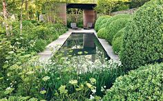 Cenolophium denudatum (Belgravia cow parsley), in Tom Stuart-Smith's Chelsea garden 2010