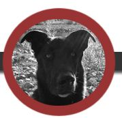 dogma - The very BEST dog training and dog daycare!