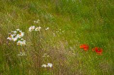 'Sommerwind' von Friedhelm Peters bei artflakes.com als Poster oder Kunstdruck $16.63