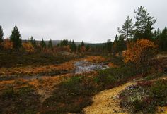Urho Kekkonen National Park - Lapland, Finland Lapland Finland, Autumn Colours, Grey Skies, The Eighth Day, Us Travel, Wilderness, Paths, National Parks, Pictures