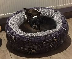 Boston Terrier, Dogs, Animals, Cats, Pet Dogs, Cuddling, Animales, Boston Terriers, Animaux