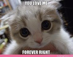 You Love Me, Forever Right | Cute Captions
