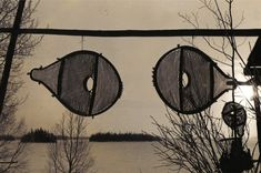 Newly made beavertail snowshoes hung to freeze -dry . The snowshoes are washed with soapy water and then freeze dried to whiten them for aesthetic reasons, Assinica Lake , 1980 ; photo Henri Vaillancourt
