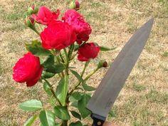 Reiß doch nicht den Schnabel auf, du GUTMENSCH du! Plants, Blog, Fish, Flora, Blogging, Plant, Planting