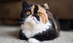 Você sabia que gatos têm emoções? (20 fotos) (16)