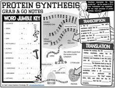 Grab-and-Go Notes: Protein Synthesis 8th Grade Science, High School Science, Life Science, Biology Classroom, Teaching Biology, Central Dogma, Transcription And Translation, Fun Worksheets, Substitute Teacher