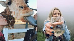 Would You Go on a Wine Safari? The Malibu Wine Safari Brings the Serengeti to California
