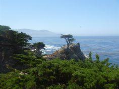 Pebble Beach, CA - Lone Cyprus Tree, 17-mile drive