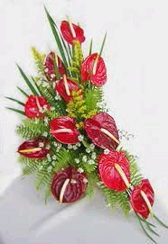 Online Dozen Anthuriums at Kapruka Tropical Flowers, Tropical Flower Arrangements, Creative Flower Arrangements, Flower Arrangement Designs, Church Flower Arrangements, Flower Centerpieces, Flower Decorations, Altar Flowers, Church Flowers