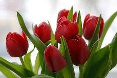 Отношения,как цветы... Когда они умирают, не нужно делать из них гербарий