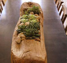 Succulent Plants indoors in Wood
