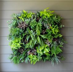 "Pamela Crawford New Living Wall -   14"" x 14"" x 5"" Square - Color: Black  Basket with Coco Liner (9 front holes and 6 side holes). Outer Frame 6.5mm & Inner 4mm. Great for conserving space in small gardens. Add a splash of color to your wall! #living wall planter #space saving garden"