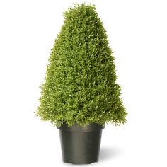 National Tree Boxwood Tree with Dark Green Plastic Pot, 30-Inch >>> You can find more details by visiting the image link.